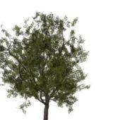 Nature European Rowan Tree