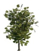 Nature Evergreen Aromatic Plant