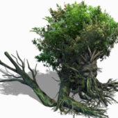 Nature Art Treant Plant