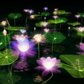 Lotus Pond Plant
