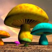 Fantasy Mushroom Plant
