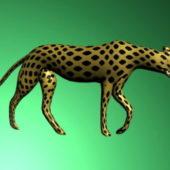 Female Cheetah Animal