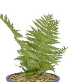 Plant Fern In Blue Pot