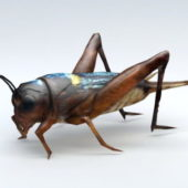 Field Cricket Animal