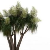 Florida Slash Green Pine Tree