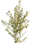 Florist Foliage Green Plant