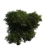 Nature Green Flourishing Tree
