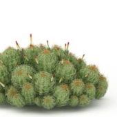 Nature Plant Flowering Cactus Plants