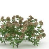 Garden Flowering Green Plant