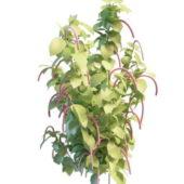 Flowering Shrubs Green Plants