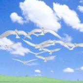 Flying Dove Animal Animation