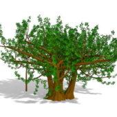 Garden Foliage Tree