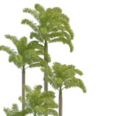 Landscape Foxtail Palm Tree