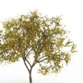 Fraxinus Pennsylvanica Green Tree