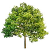 Nature Front Yard Tree