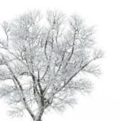 Plant Frost Covered Tree