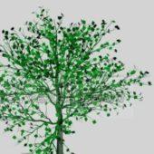 Full Grown Tree Plant
