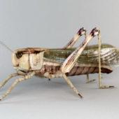 Animal Garden Locust