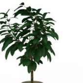 Garden Potted Plant