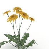 Green Gerbera Flower Plant