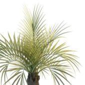 Green Giant Palm Tree