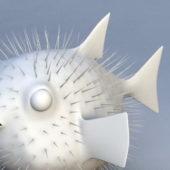 Globefish Diodon Animal