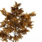 Red Leaf Golden Ash Tree