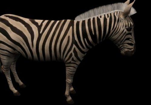 Grants Zebra Animal