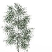 Gray Birch Green Tree