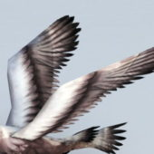 Great Shearwater Animal