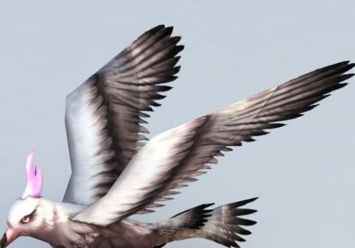 Great Shearwater Animal