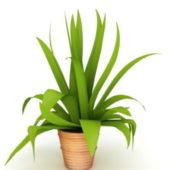 Potted Green Leaf Indoor Plant