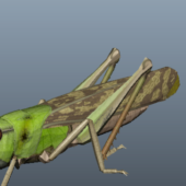 Green Locust Nature Animal