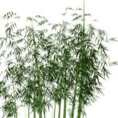 Green Bamboo Forest Plant