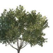 Flourishing Green Tree