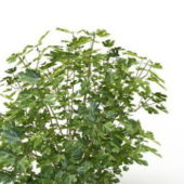 Nature Plant Green Herb Plants
