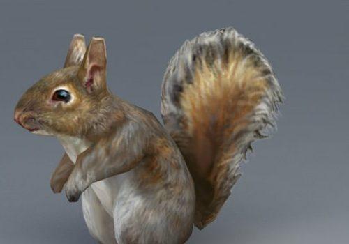 Grey Squirrel Animal