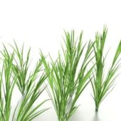 Growing Grass Plant