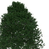 Growing Shade Nature Tree