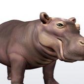 Happy Hippo Animal