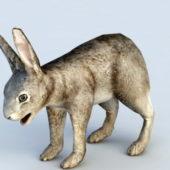 Wild Hare Rabbit