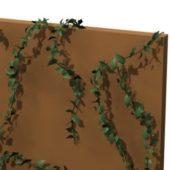 Persian Ivy Plant