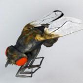 Housefly Animal