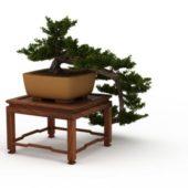 Indoor Plant Desk Bonsai Tree