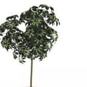 Indoor House Plant Green Tree