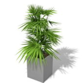 Indoor Office Pot Plant