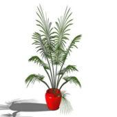 Garden Indoor Potted Palm