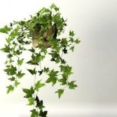 Ivy Plants Climbing Tree