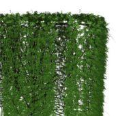 Ivy Hedge Plant