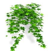 Ivy Leaf Vine Tree
